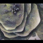mov)art=texture fluid