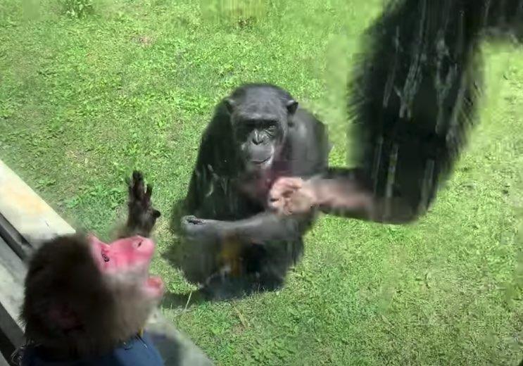 SQ_monkeyZoo